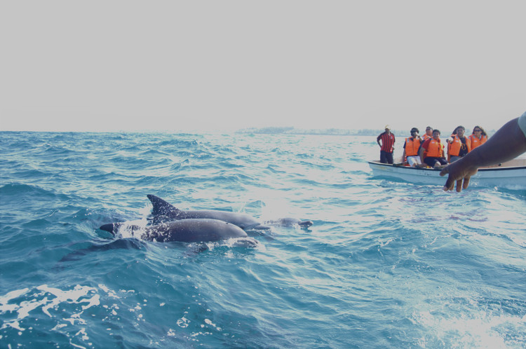Zanzibar-Dolphin -tour exclusive wilderness trails