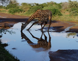Exclusive-Wilderness-Trails - Lake Manyara National Park Day Tour