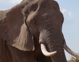 Exclusive-Wilderness-Trails - Tarangire National Park Day Trip Elephant