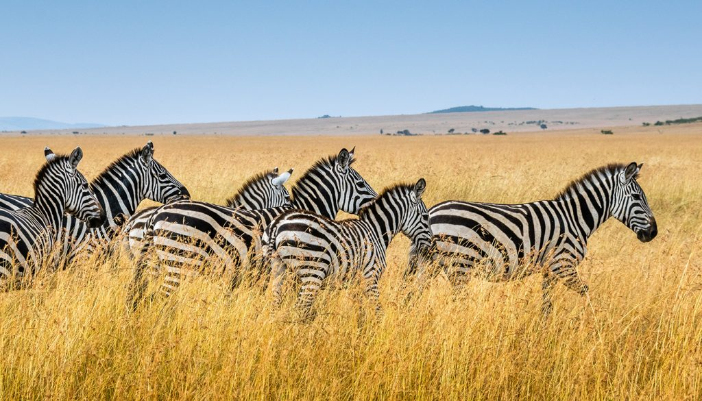 Tarangire - Lake Manyara National Park