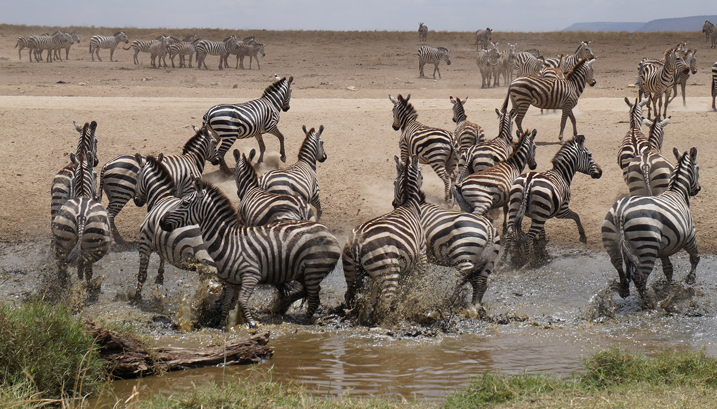 Extraordinary Tanzania Wildlife Safari
